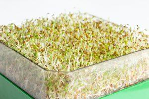 Cultivez vos graines germées